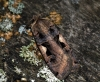 Setaceous Hebrew Character Copyright: Ben Sale