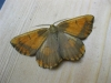 Orange Moth. Copyright: Stephen Rolls