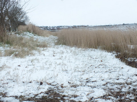 The Walls reedbed Copyright: Peter Pearson