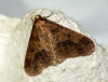 Mottled Umber 4 Copyright: Ben Sale