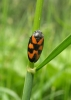Froghopper Copyright: Sue Grayston