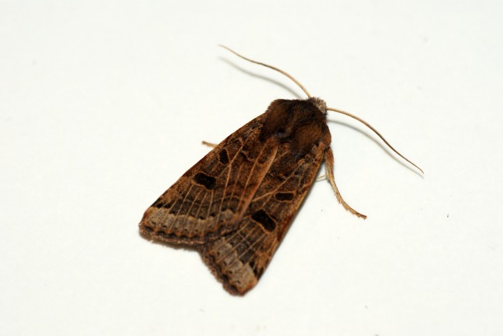 Lunar Underwing 3 Copyright: Ben Sale