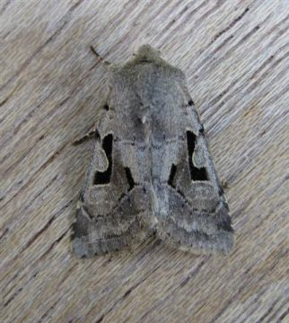 Hebrew Character Copyright: Stephen Rolls