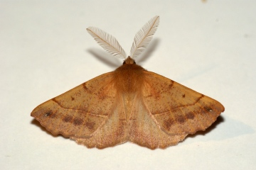 Feathered Thorn 2 Copyright: Ben Sale