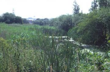 Littlebrook Lakes-reedbed Copyright: Peter Harvey