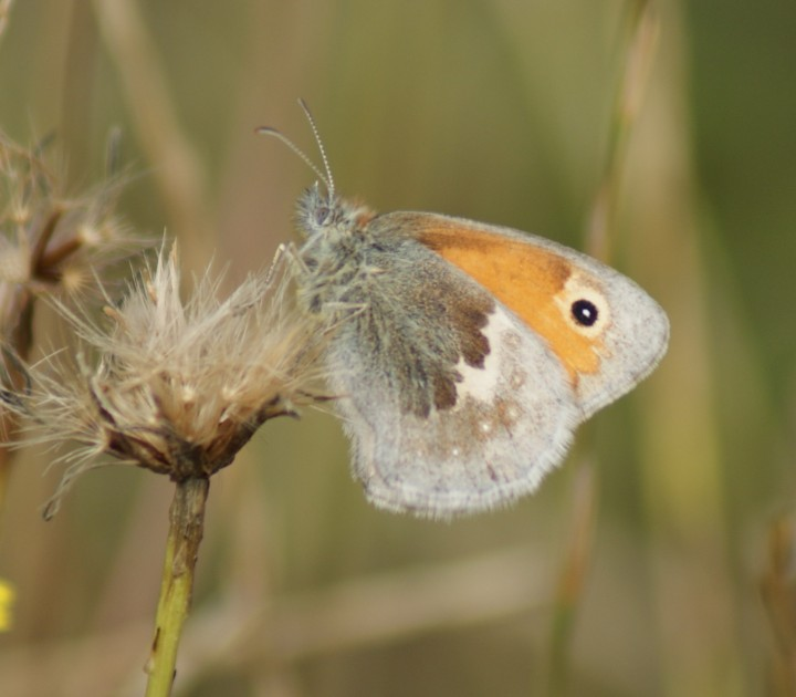 Small Heath Copyright: Robert Smith