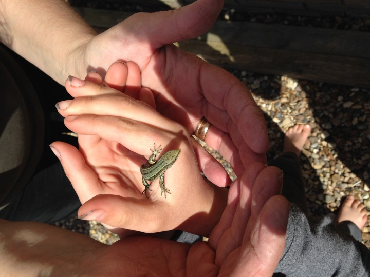 Grenn Lizard Copyright: Vivianne Tierney