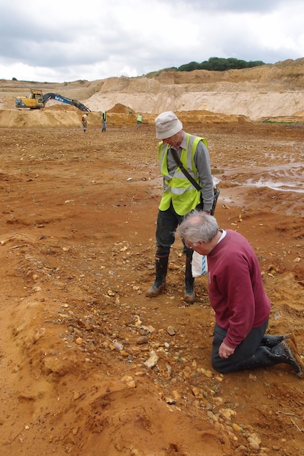Examine the Red Crag nodule bed at Elsenham Quarry Copyright: Gerald Lucy