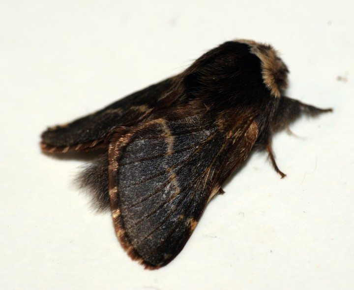 December Moth 2 Copyright: Ben Sale