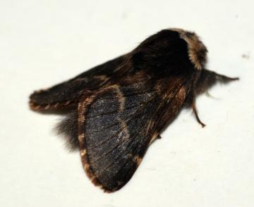 December Moth 2 Copyright: Ben Sale