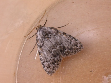 Small Black Arches Copyright: Russell Neave