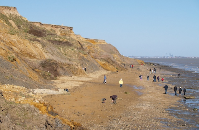 The Naze cliffs and foreshore Copyright: Gerald Lucy