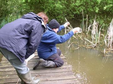 Bottle Trapping for newts Copyright: Essex Ranger Service 2004  (J Cranfields Camera )
