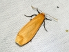 Orange Footman 3 Copyright: Ben Sale