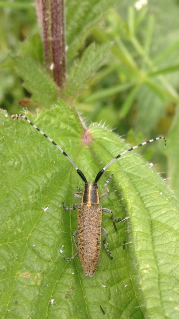 What Beetle is this Copyright: Sophie Dennison