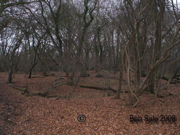 Hatfield Forest Copyright: Ben Sale