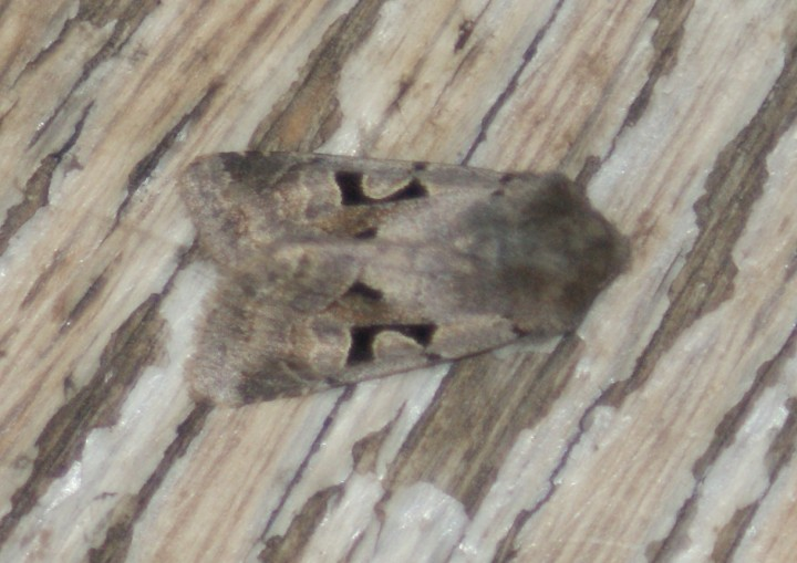 First Hebrew Character of the Year Copyright: Steven Allain, 2012