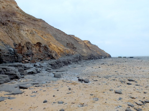 Naze cliffs shore scoured by easterlies Copyright: Peter Pearson