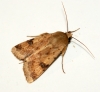 Bordered Straw Copyright: Ben Sale