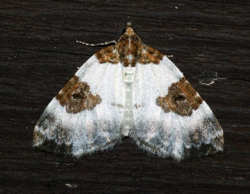 Blue-bordered Carpet 3 Copyright: Ben Sale