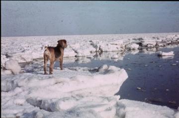 River Blackwater January 1963 2 Copyright: Graham Smith