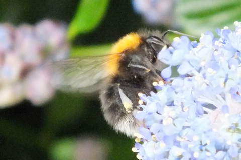 New Garden Bee 2 Copyright: Peter Pearson