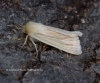 Common Wainscot  Mythimna pallens Copyright: Graham Ekins