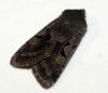 Hebrew Character 4 Copyright: Ben Sale