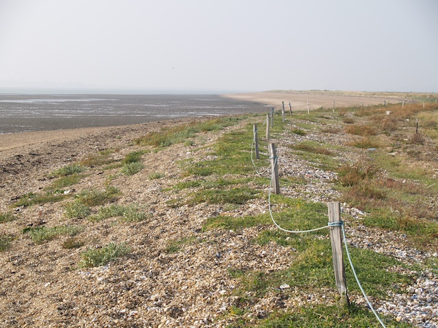 Colne Point Shingle Spit Copyright: Gerald Lucy