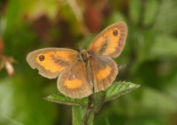 Gatekeeper Copyright: Peter Harvey