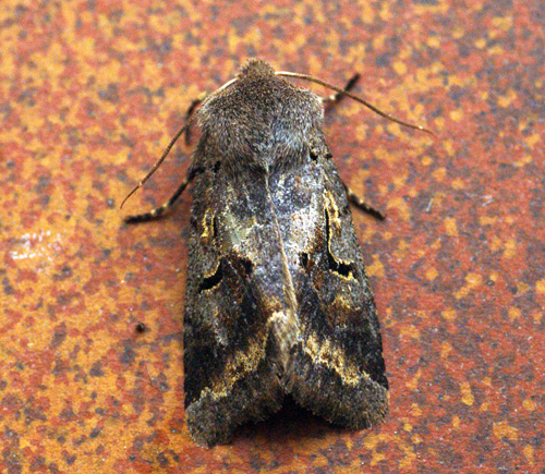 Hebrew Character aberration Copyright: Ben Sale