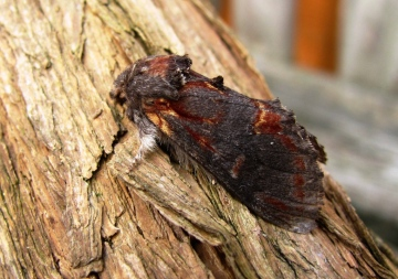 Iron Prominent Copyright: Graham Smith