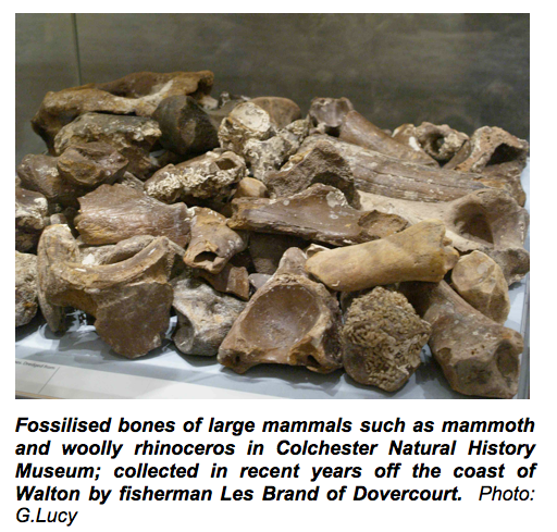Ice Age fossil mammal bones Copyright: Gerald Lucy