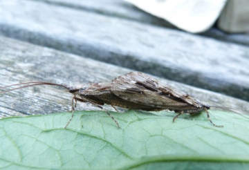 Caddis Fly Copyright: Graham Smith