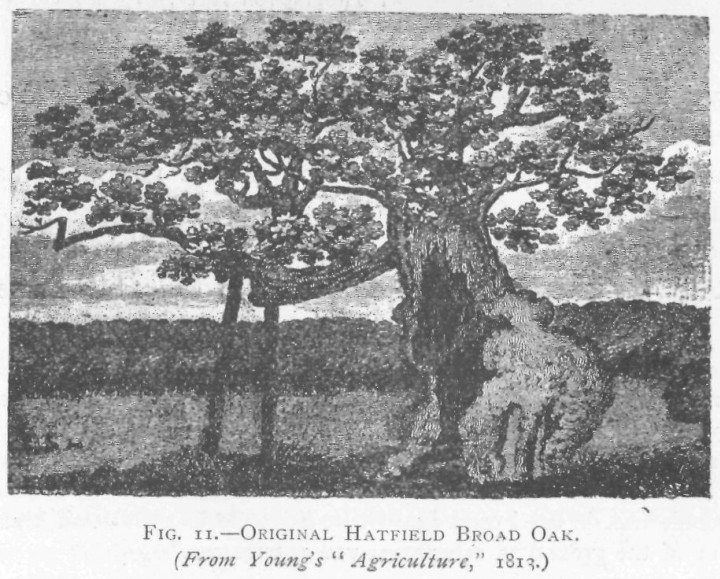 Hatfield Broad Oak Copyright: Essex Field Club