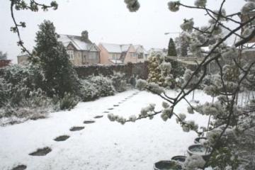Grays garden 6th April Copyright: Peter Harvey