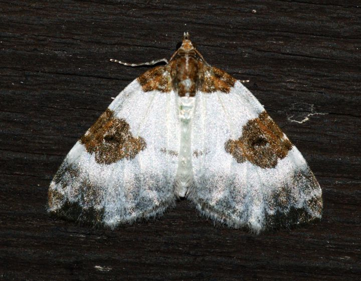 Blue-bordered Carpet Copyright: Ben Sale