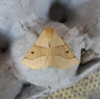 Scalloped Oak Copyright: Stephen Rolls