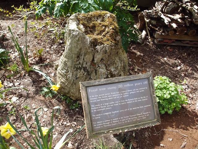 Jurassic fossil tree stump by Thorndon Visitor Centre Copyright: Gerald Lucy