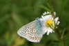 Common Blue 2 Copyright: Ben Sale