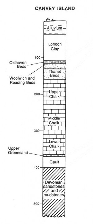 The succession in the Canvey Island borehole (scale in metres). Copyright: Gerald Lucy