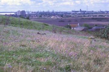 View of grassland scarp Copyright: P.R. Harvey
