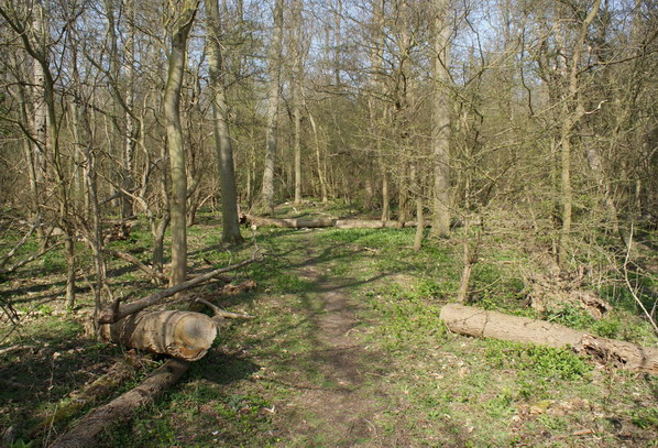 Jermaines Wood - deadwood Copyright: Robert Smith