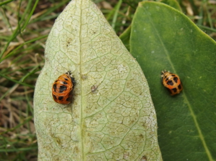 UID Ladybird 1 Copyright: Richard Bigg