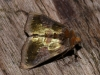 Burnished Brass 3 Copyright: Peter Furze