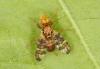 Goniglossum wiedemanni male 2 Copyright: Peter Harvey