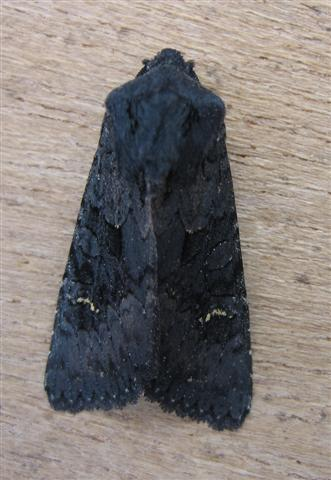 Black Rustic Copyright: Stephen Rolls