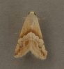 Small marbled 1 Copyright: Graham Ekins