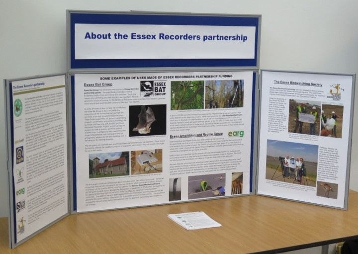 Essex Recorders partnership display Copyright: Peter Harvey