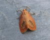 Rosy Footman Copyright: Stephen Rolls